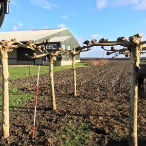bomen uit eigen kwekerij Lisserbroek Le Gardinier