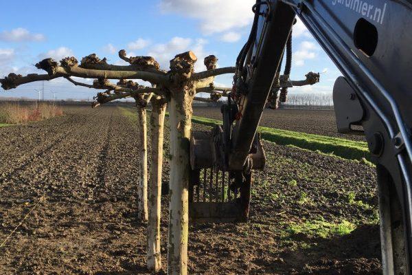 Le Gardinier bomen uit eigen kwekerij